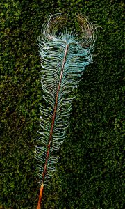 peacock feather sculpture