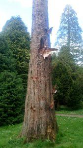 butterflies on tree trunk