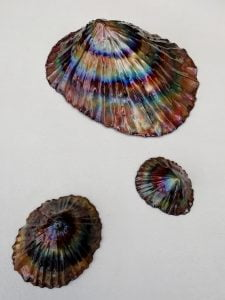 Emily Stone copper Limpet sculptures